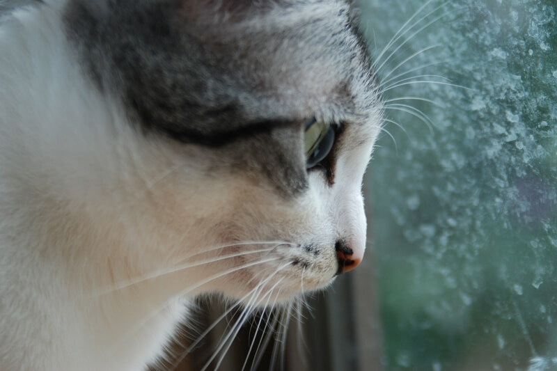 cats and separation anxiety _ cat looking out rain-covered window