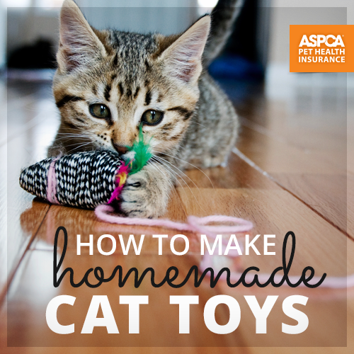 How To Make Homemade Cat Toys _ ASPCA Pet Health Insurance _ small kitten playing with cat toy