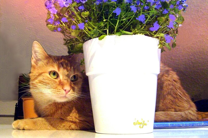 how to keep cats out of plants _ non-toxic plants for cats