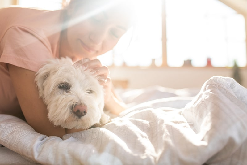 how to introduce a new dog to your home _ woman petting a maltese dog on a bed with a white comforter