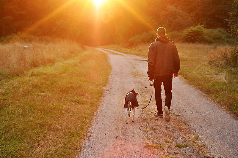 where to adopt a rescue dog _ man walking dog wearing a coat