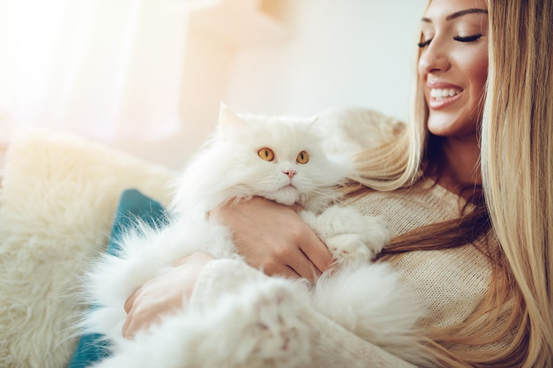 top health problems for Persian cats _ white persian cat being held by a woman on a couch