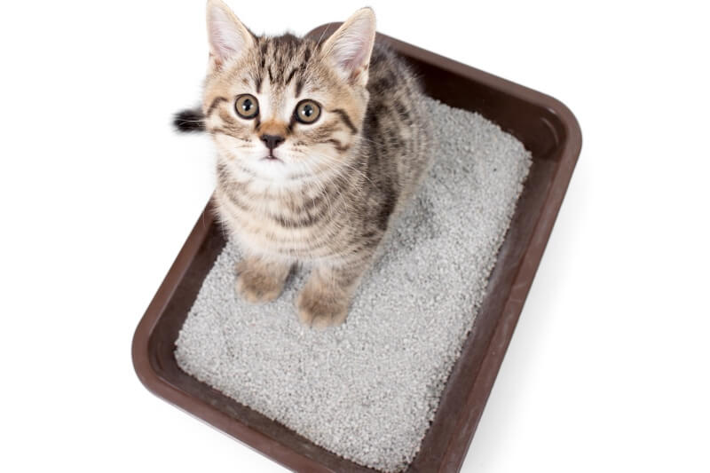 why do cats go outside the litter box _ tabby cat in a brown litter box