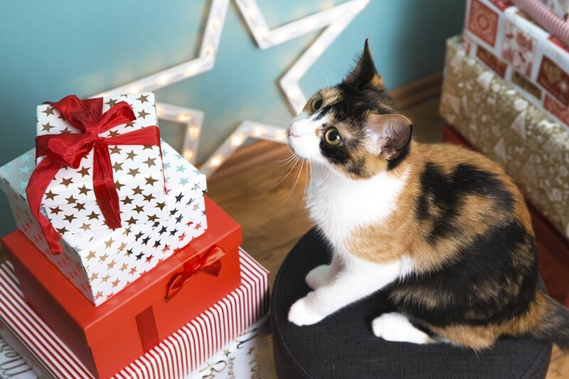 dog cat Christmas safety _ calico cat looking at presents
