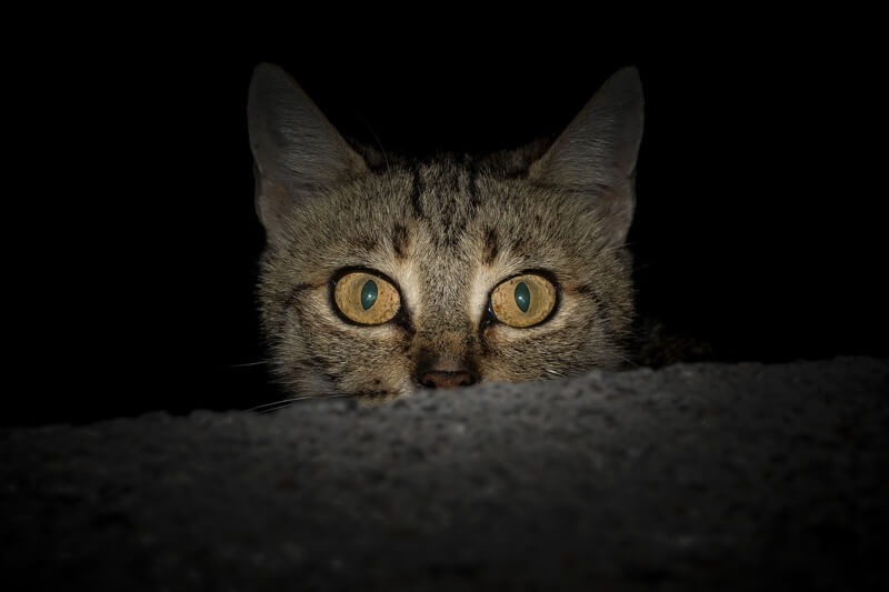 cat playing all night _ domestic shorthaired cat peeking over a stair