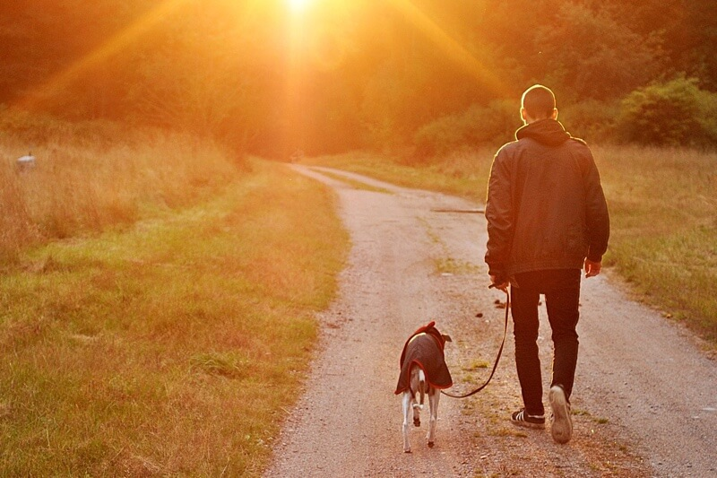 preventing heart disease in dogs and humans _ man walking down a trail with a dog in a coat