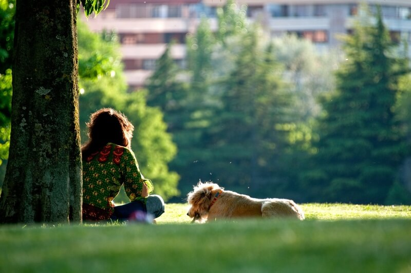 types of heart disease in dogs _ woman and dog sitting next to a tree in a park