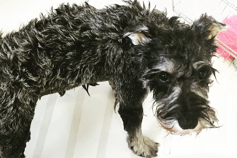 Why do dogs hate bath time?