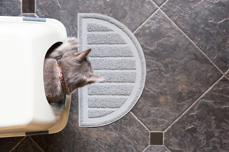how often should a cat poop _ gray cat exiting a covered litter box
