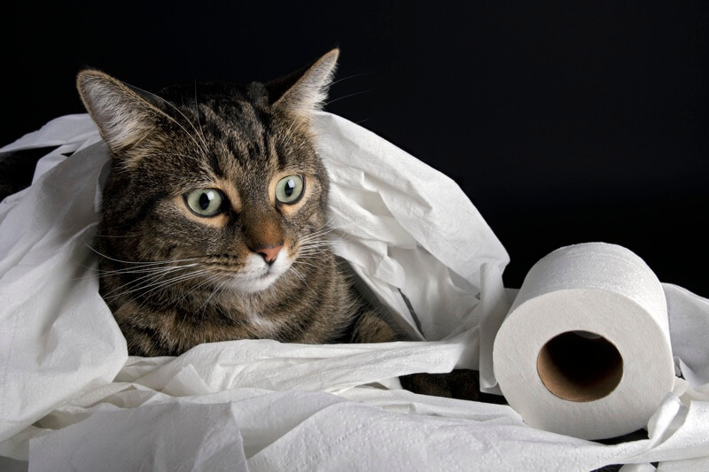 common causes of cat poop problems