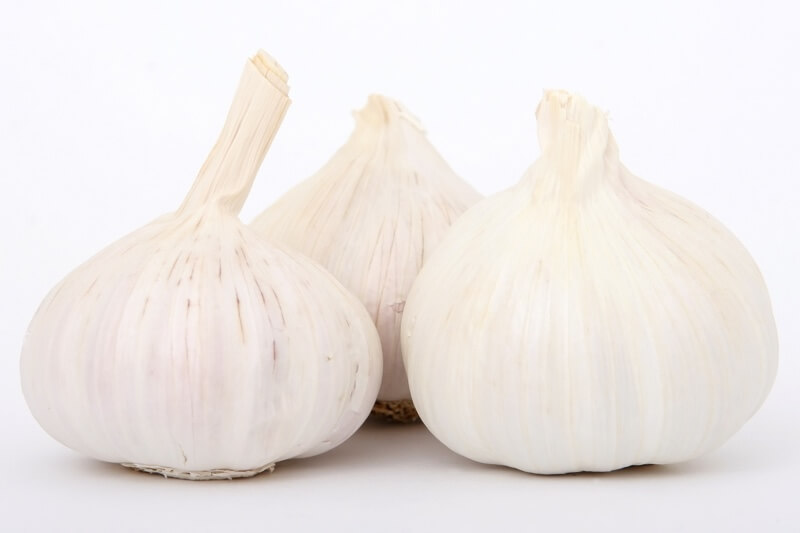 why dogs shouldn't eat garlic