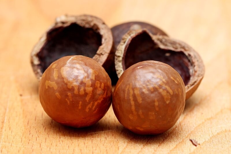 why dogs shouldn't eat macadamia nuts