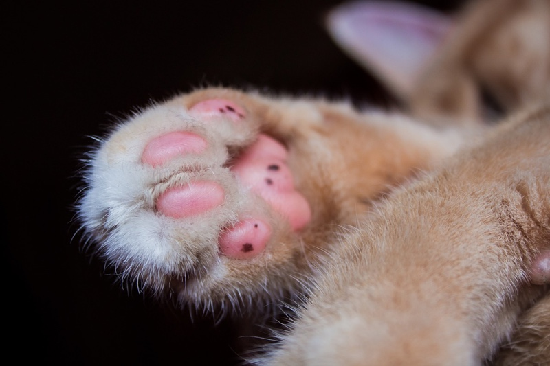 cat nail care tips