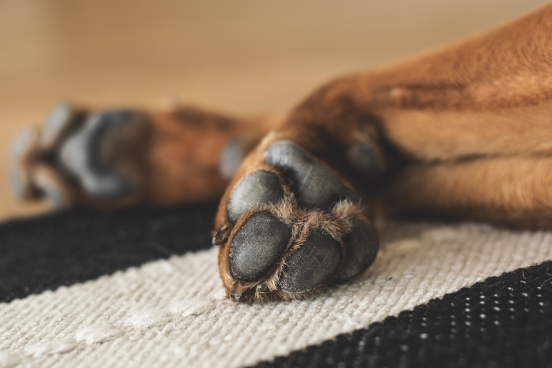 dog nail care tips _ brown dog paws