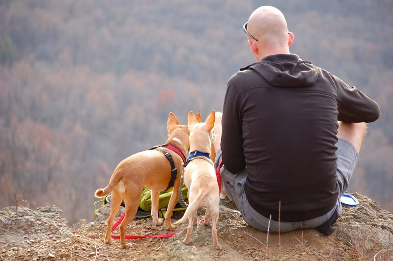 pet health insurance coverage for dogs _ man hiking with two chihuahuas