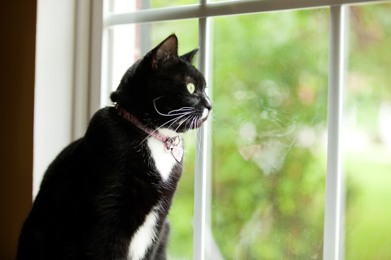 preventing high-rise syndrome in cats _ black and white cat looking out a window