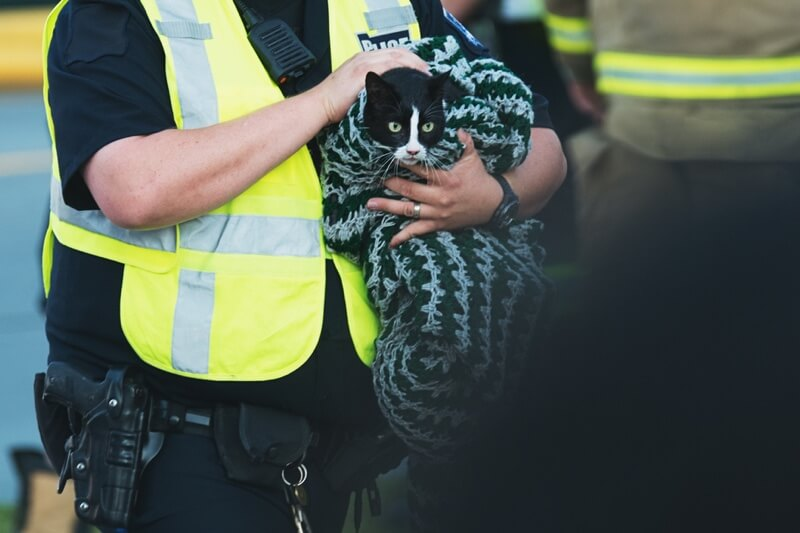 pet rescue alert stickers for emergencies _ cat in blanket being rescued