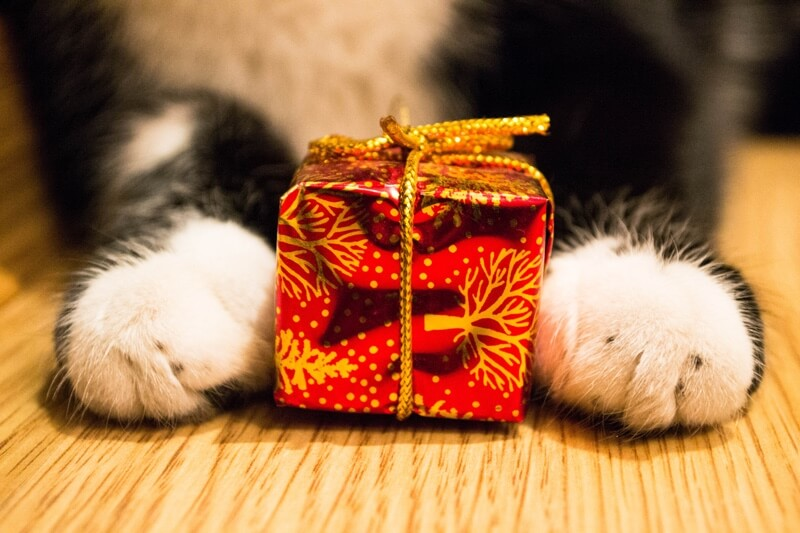 why cats give gifts _ black and white cat paws with tiny wrapped gift