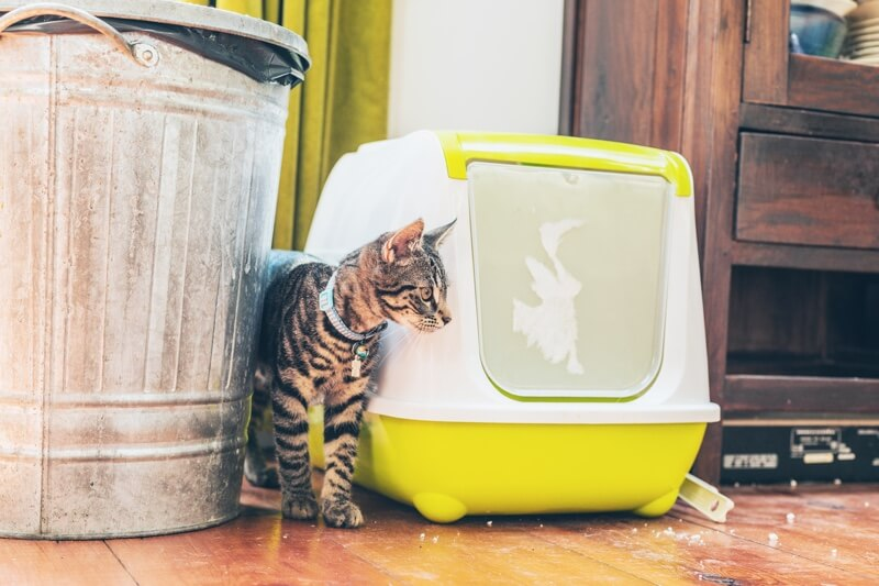 why do cats go to the bathroom outside their litter box _ cat with blue collar