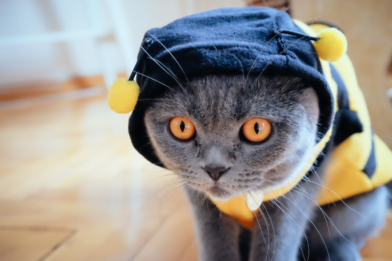 pet costume safety checklist _ cat dressed as a bumble bee