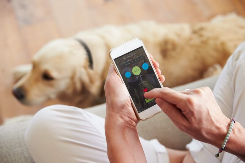 pet health monitor gadgets _ woman checking health app on smartphone Golden Retriever resting on the floor