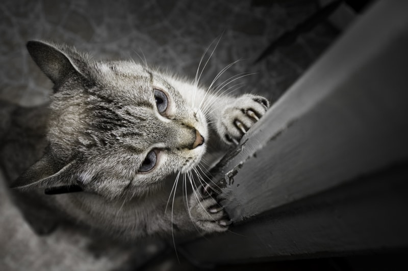 annoying cat behaviors and how to correct them _ cat scratching a door frame