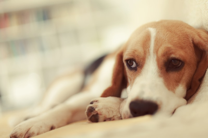 Poison Safety Tips Every Pet Parent Needs to Know