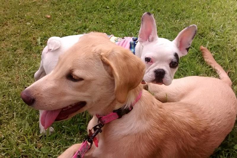 Canine Parvovirus Symptoms And Prevention