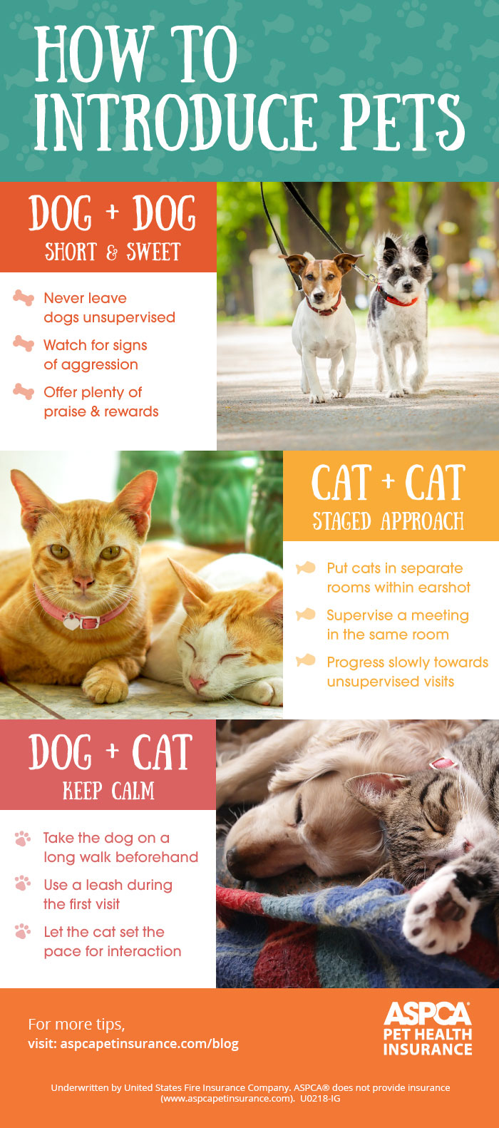 Pet Socialization Infographic