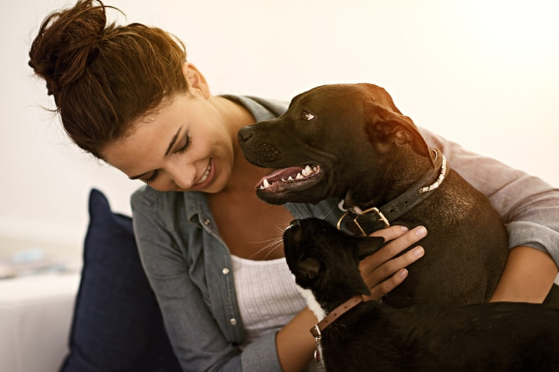how to introduce cats and dogs _ black dog and tuxedo cat with woman on a couch