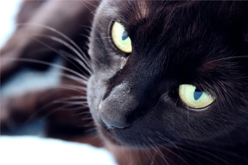 tips to care for your cats eyes _ black cat with yellow eyes