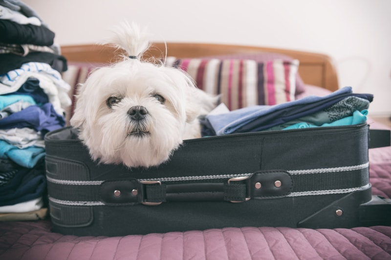how to prepare to travel with pets _ dog in a suitcase