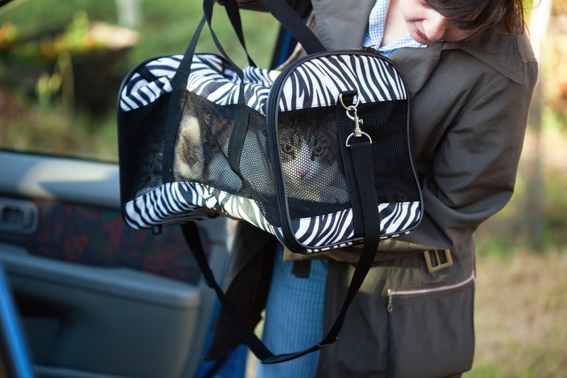tips for taking your cat to the veterinarian _ woman transporting a cat in a carrier