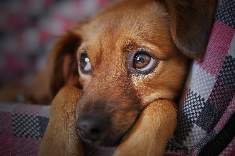 Signs Your Dog or Puppy is Sick