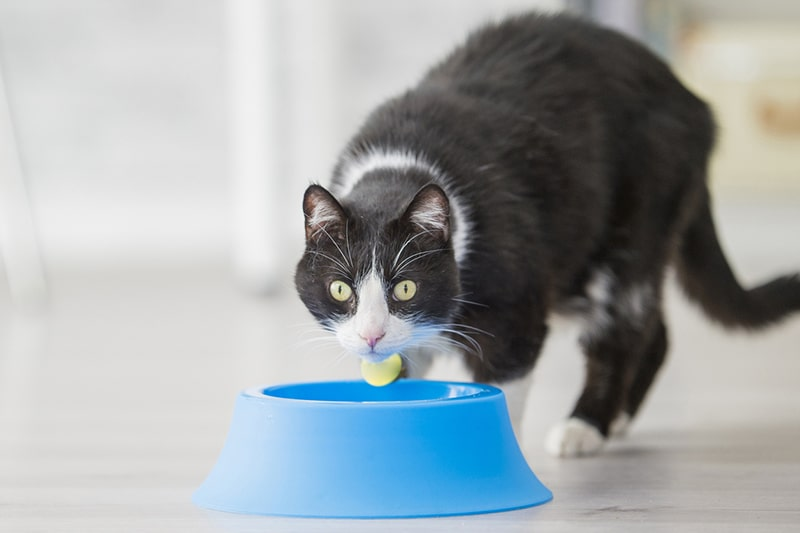 heart-healthy diet tips for pets _ cat eating out of a blue bowl