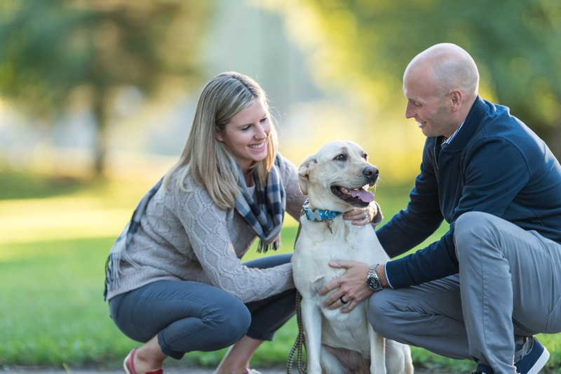 improving communication with your dog _ couple with a yellow Labrador outdoors