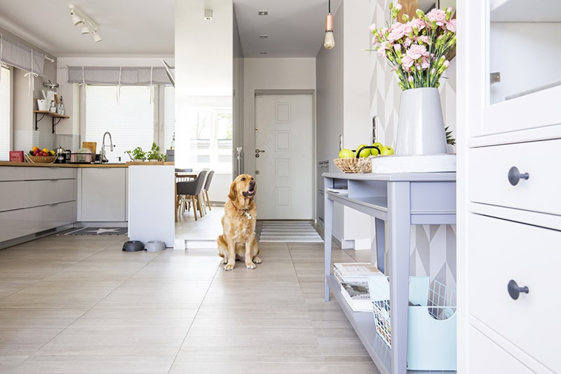 tips for apartment living with dogs _ golden retriever sitting in a kitchen
