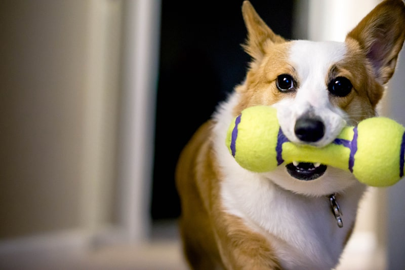 Choosing the Best Pet Treats and Toys for Your Dog and Cat