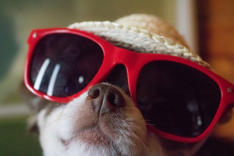Sun Safety Concerns for Dogs and Cats