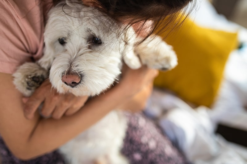 What to Know About Mental Health Care and Dogs