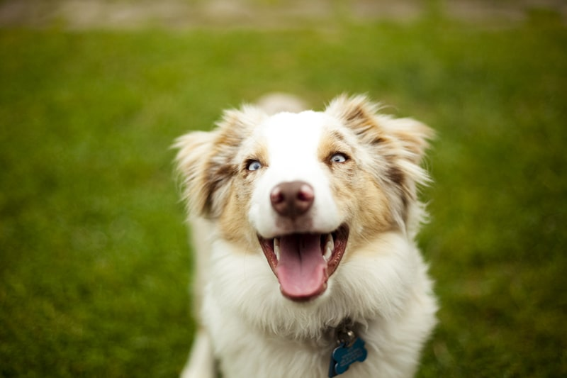 avoiding and preventing mental health issues in dogs _ happy healthy puppy