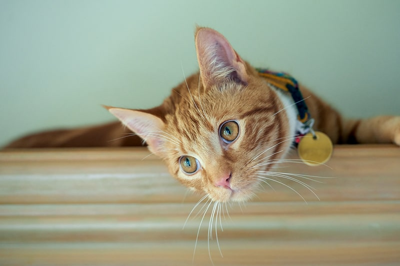 Boosting Your Cat's Wellness Routine