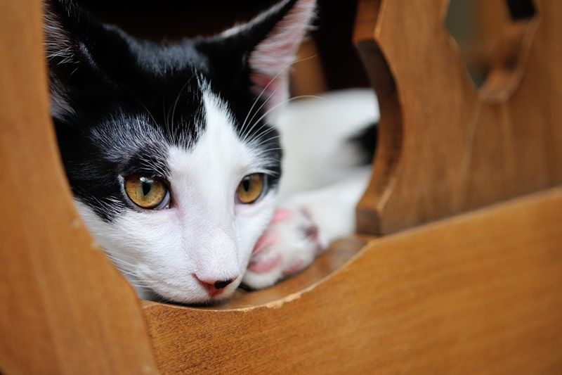 What to Know About Mental Health Care and Cats