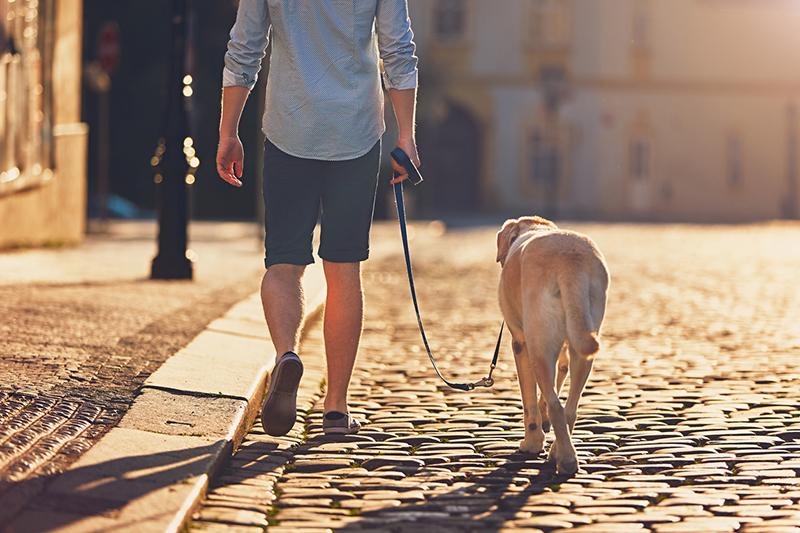 old dog exercise tips _ Morning walk with dog