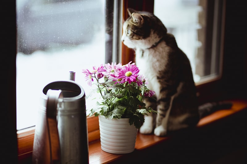 cats and depression _ tabby cat sitting by a window with flowers beside