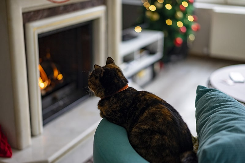 tips for keeping cats warm in the winter _ Tortoiseshell cat sitting in front of the fireplace