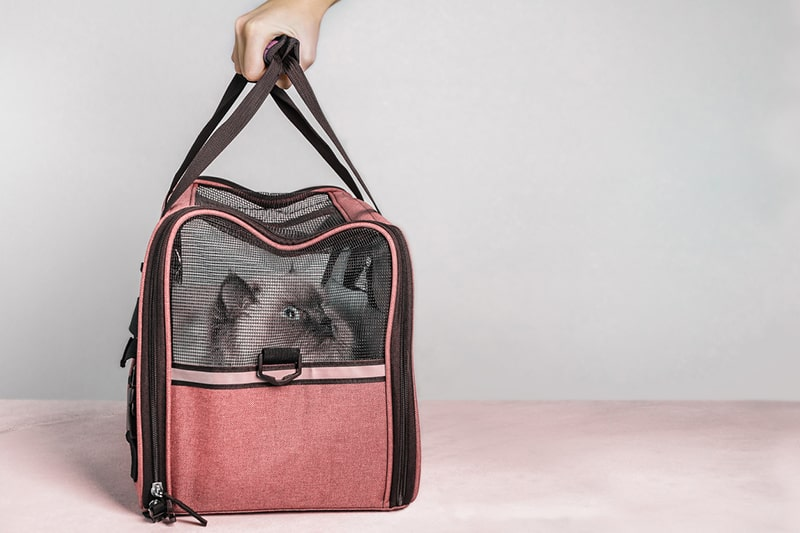 How to Travel With Your Cat _ ASPCA Pet Insurance _ longhaired cat in a pink travel carrier