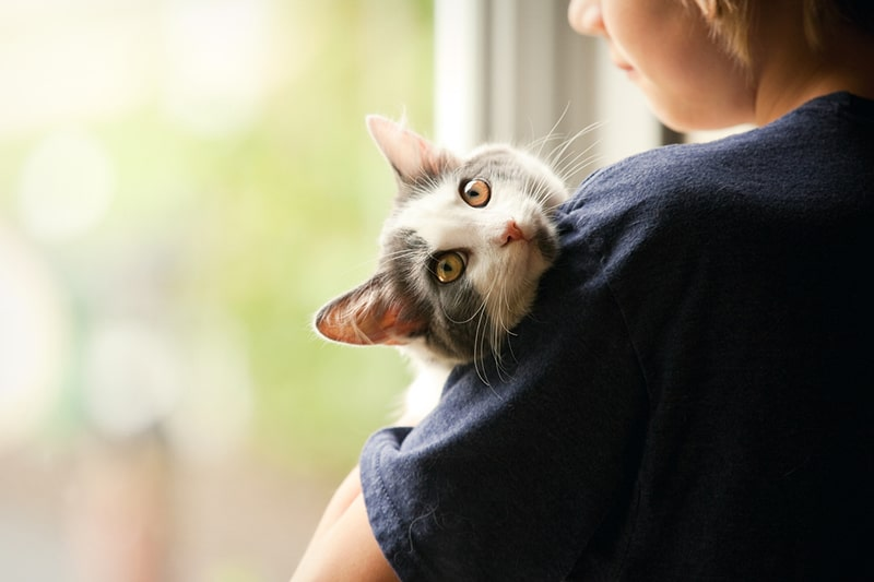 monthly costs of having a cat _ boy holding a gray and white cat by a window