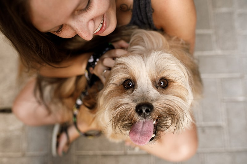 How Much Does It Cost to Have a Dog _ ASPCA Pet Insurance _ happy dog being petted by a woman