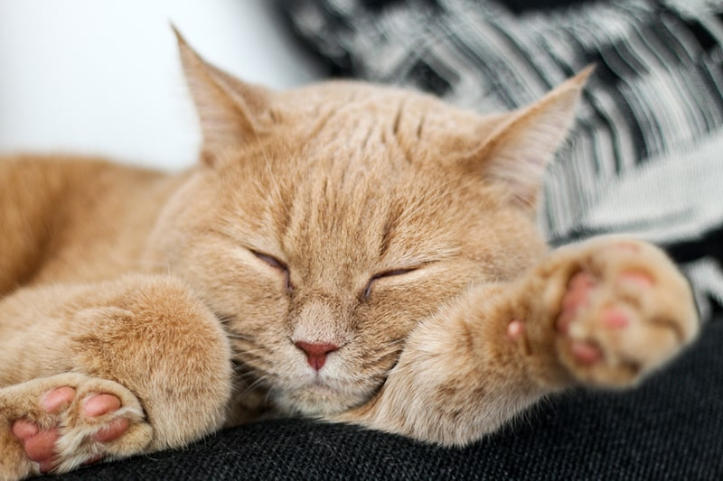common health problems for mixed breed cats _ orange tabby cat lying on a black couch